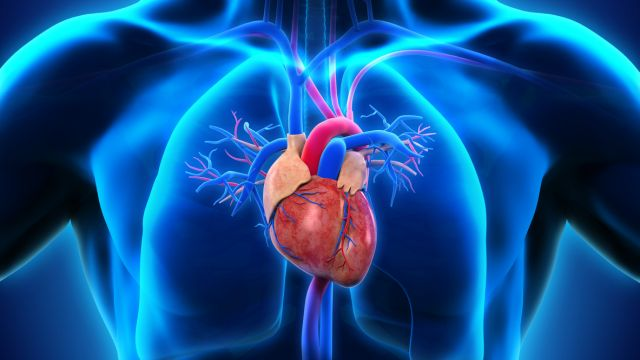 Белодробно сърце